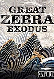 Watch Free Great Zebra Exodus (2013)