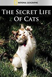 Watch Free The Secret Life of Cats (2014)