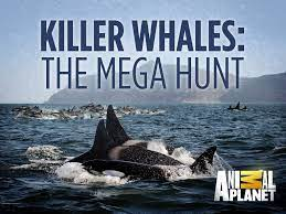 Watch Free Killer Whales: The Mega Hunt (2016)