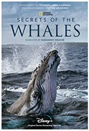 Watch Free Secrets of the Whales (2021)