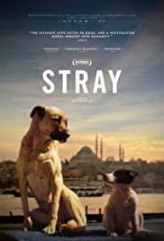Watch Free Stray (2020)