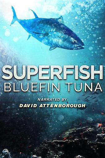 Watch Free Superfish Bluefin Tuna (2012)