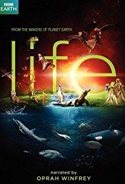 Watch Free Life (2009)